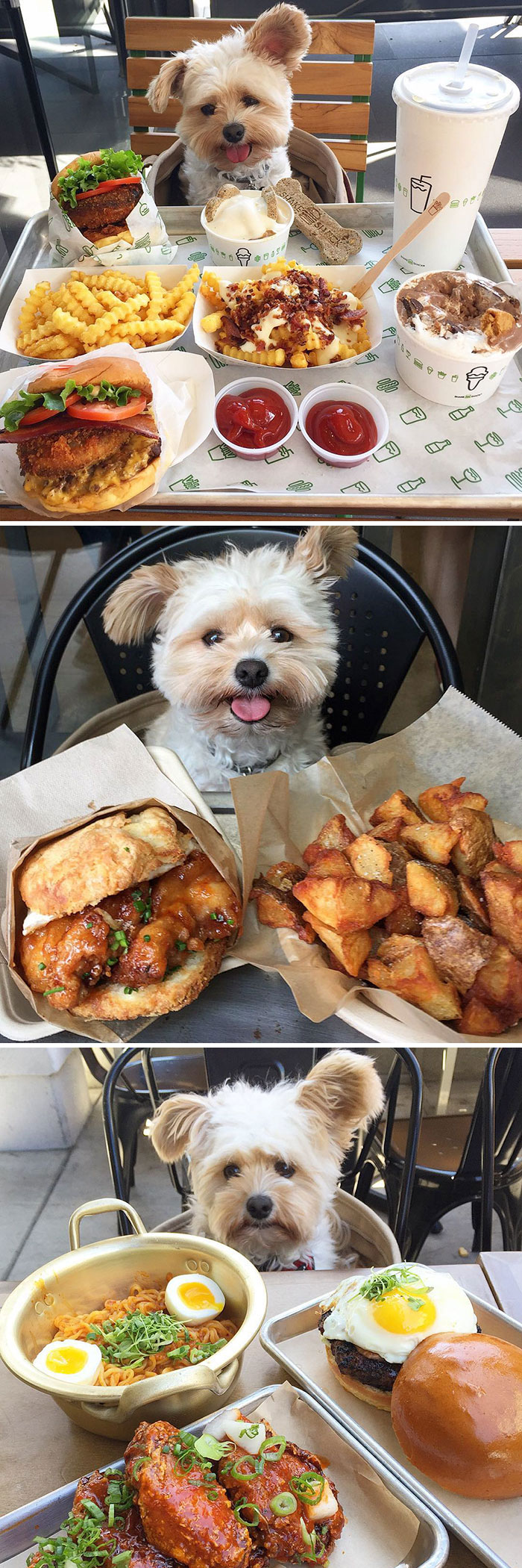 spoiled-dogs-that-live-better-than-you-1-59b13ff09a6f7__700-59c4cf91d5ab4__700