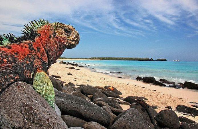 galapagos-island.jpg.694x0_default