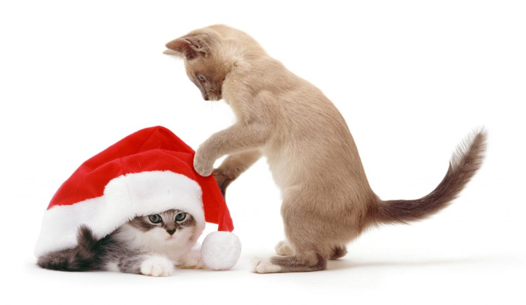 2_CATERS_cats_dogs_in_xmas_hats_003-1024x594