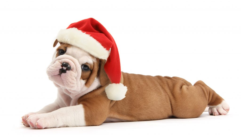 7_CATERS_cats_dogs_in_xmas_hats_008-1024x597