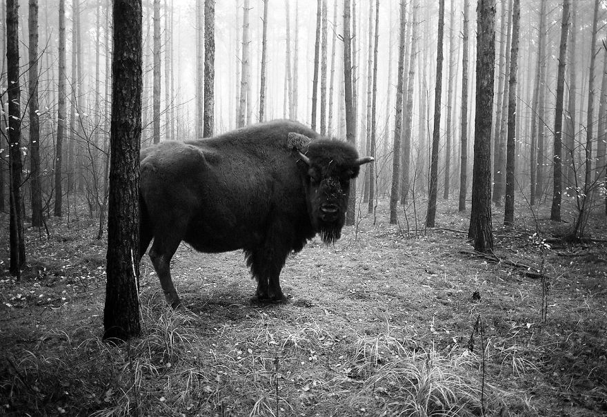 Amazing-misty-forest-pictures-full-of-animals-5a2e38a5cc5a0__880