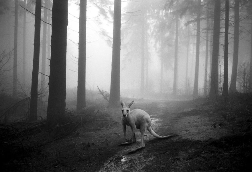 Amazing-misty-forest-pictures-full-of-animals-5a2e38a93ad67__880