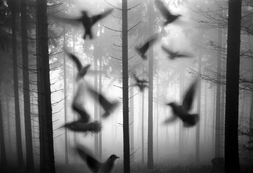 Amazing-misty-forest-pictures-full-of-animals-5a2e38ab57400__880
