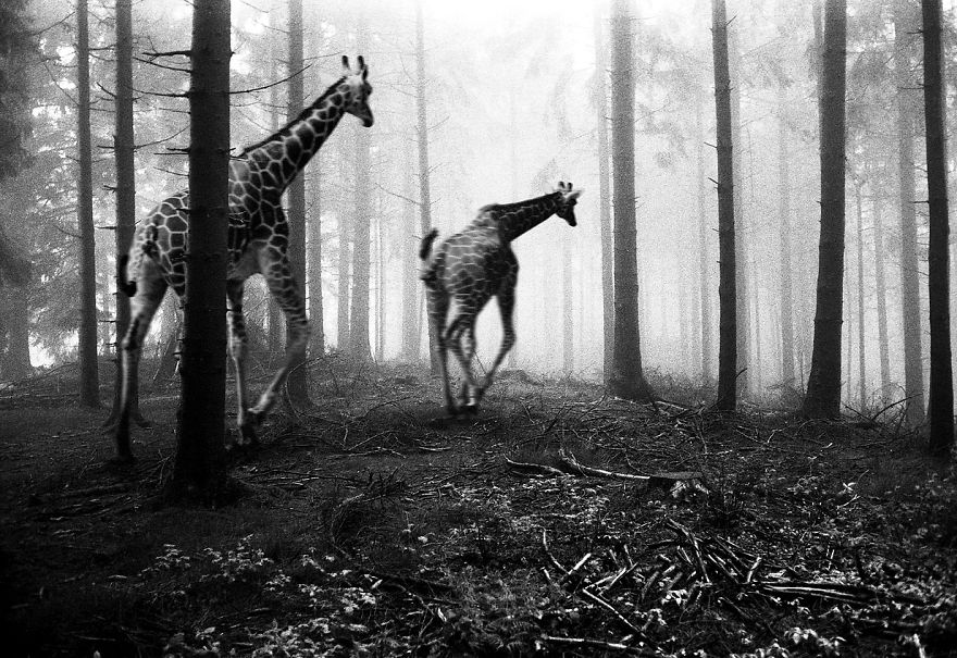 Amazing-misty-forest-pictures-full-of-animals-5a2e38b05dbc3__880