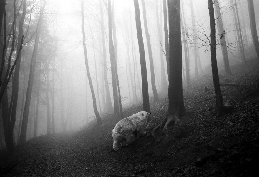 Amazing-misty-forest-pictures-full-of-animals-5a2e38b24491f__880