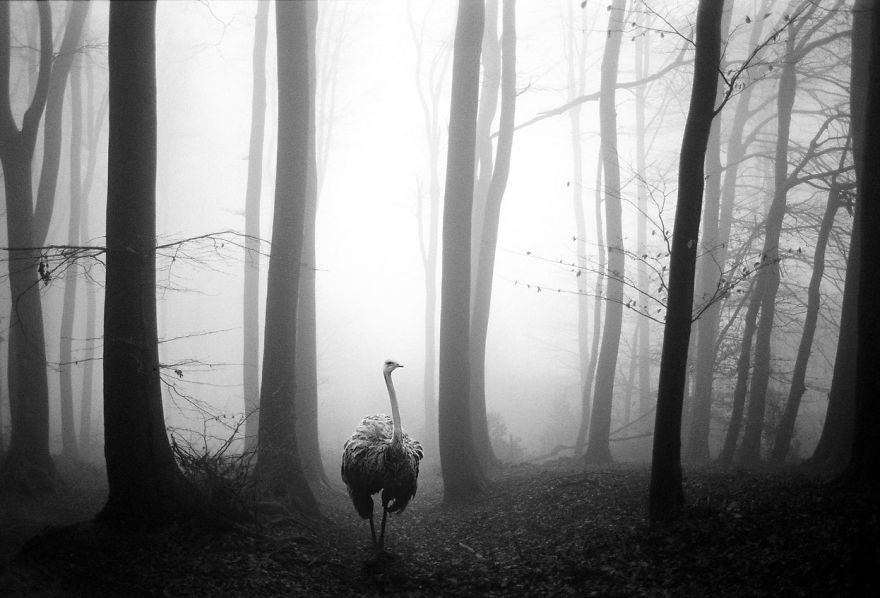 Amazing-misty-forest-pictures-full-of-animals-5a2e38b53b552__880