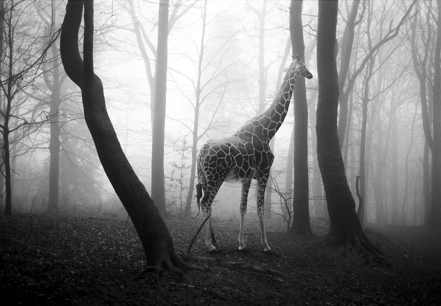 Amazing-misty-forest-pictures-full-of-animals-5a2e38b761334__880