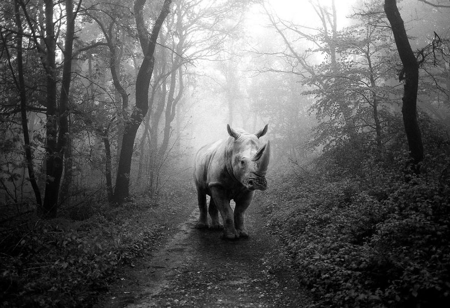 Amazing-misty-forest-pictures-full-of-animals-5a2e38bc71d39__880