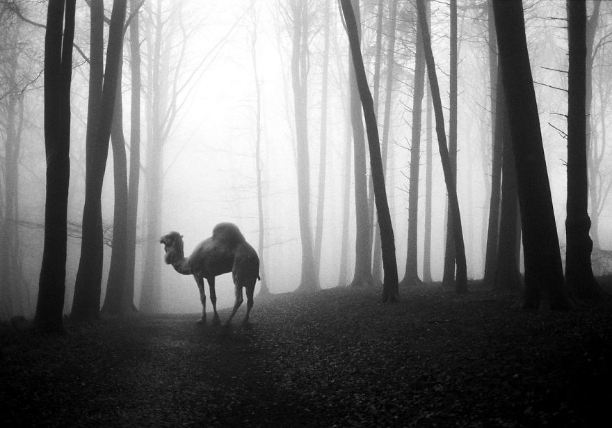 Amazing-misty-forest-pictures-full-of-animals-5a2e38c144ab9__880