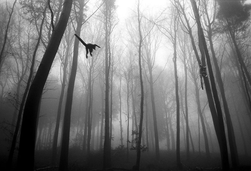 Amazing-misty-forest-pictures-full-of-animals-5a2e38c666d25__880