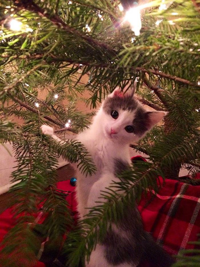 animals-destroying-christmas-can-on-christmas-tree__700