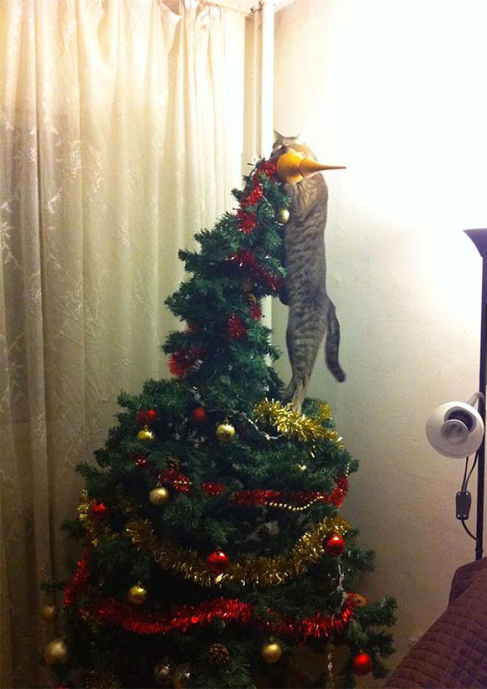 animals-destroying-christmas-cat-on-christmas-tree__700