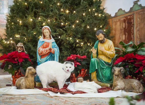 cats-crashing-nativity-scenes-101-5a27f1824692b__605