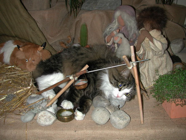 cats-crashing-nativity-scenes-102-5a27c49c6b90d__605