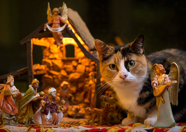 cats-crashing-nativity-scenes-105-5a27c7bdb597b__605