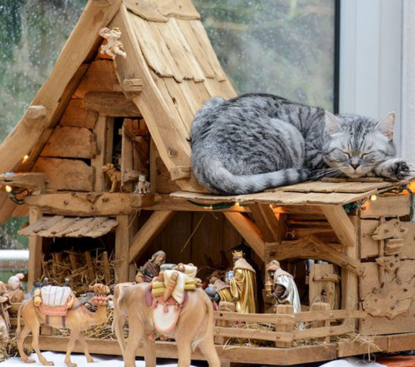 cats-crashing-nativity-scenes-109-5a27c9c4a70c6__605