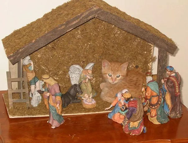 cats-crashing-nativity-scenes-110-5a27ca3165978__605