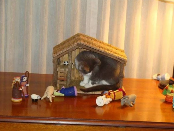 cats-crashing-nativity-scenes-112-5a27cafcdec13__605