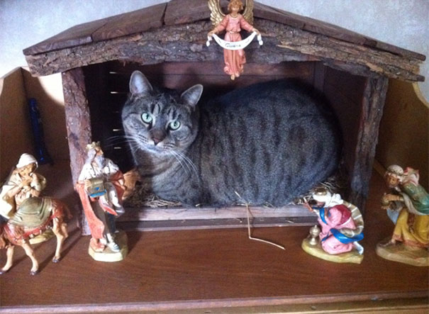 cats-crashing-nativity-scenes-116-5a27cd4d27d50__605