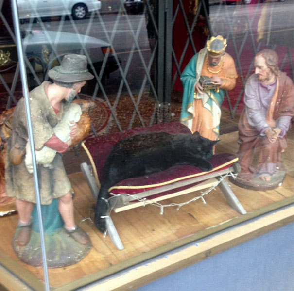 cats-crashing-nativity-scenes-137-5a27eccccfad9__605