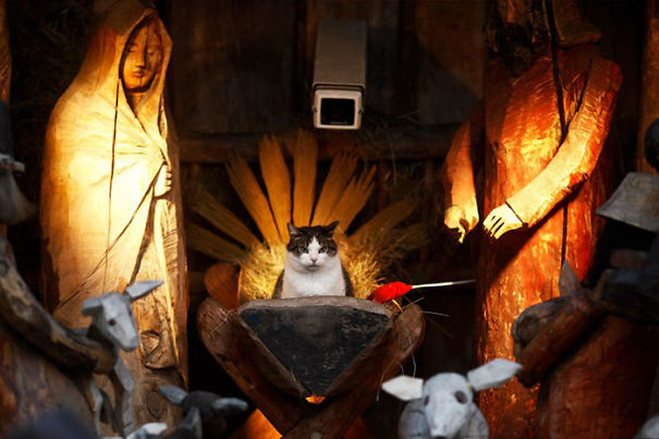 cats-crashing-nativity-scenes-141-5a2a548c99664__605
