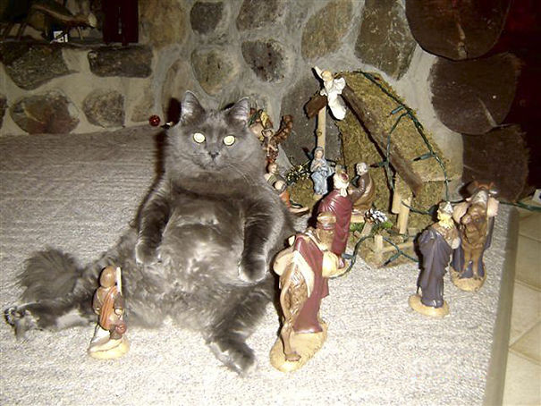 cats-crashing-nativity-scenes-41-5a27e4b7f0978__605