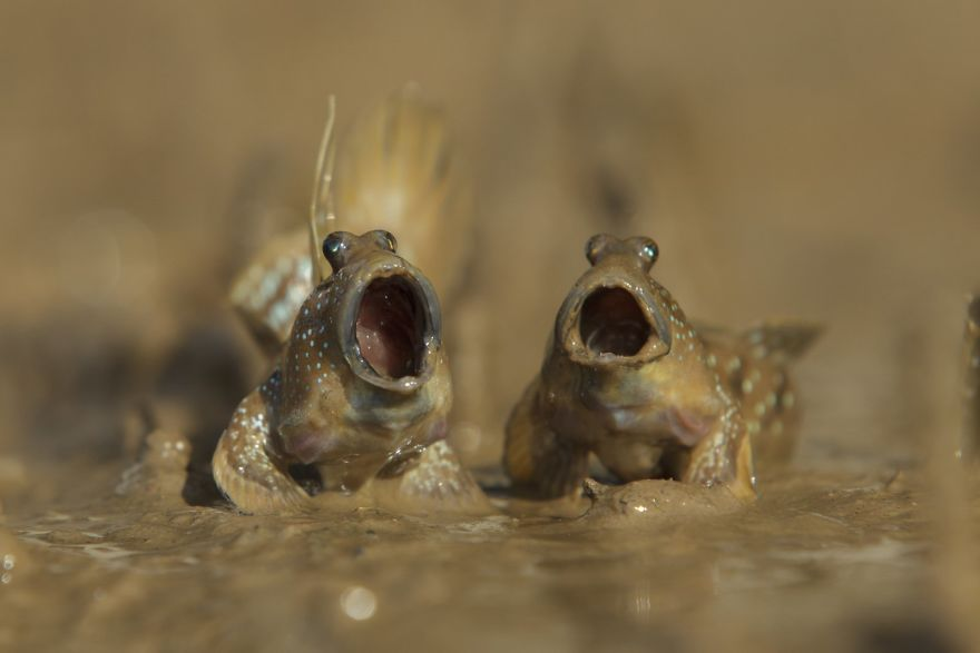 comedy-wildlife-photography-awards-winners-2017-10-5a33d73e317f9__880