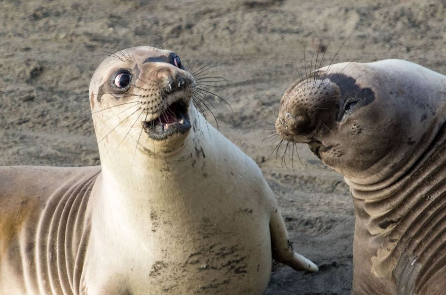 comedy-wildlife-photography-awards-winners-2017-9-5a33d73c56747__880
