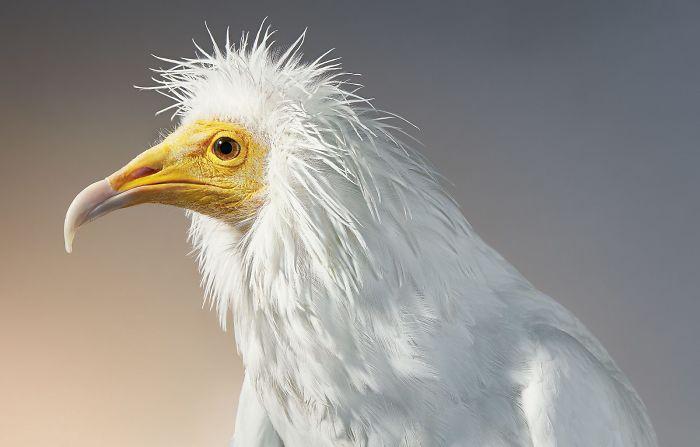 endangered-animals-tim-flach-5a45f675a68cb__700