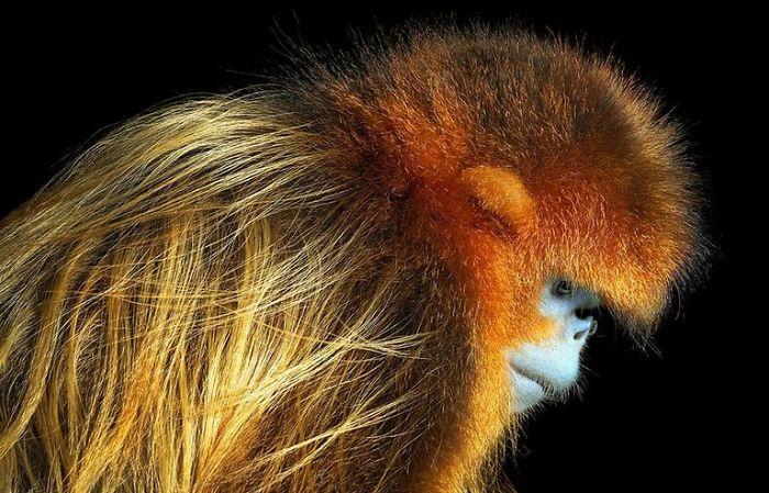 endangered-animals-tim-flach-5a45feb0c7625__700