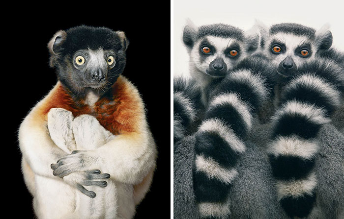 endangered-animals-tim-flach-6-5a460121c7533__700