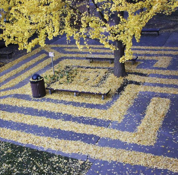 leaf-art-labyrinth-joanna-hedrick-17-5a2f8d91af9ae__700