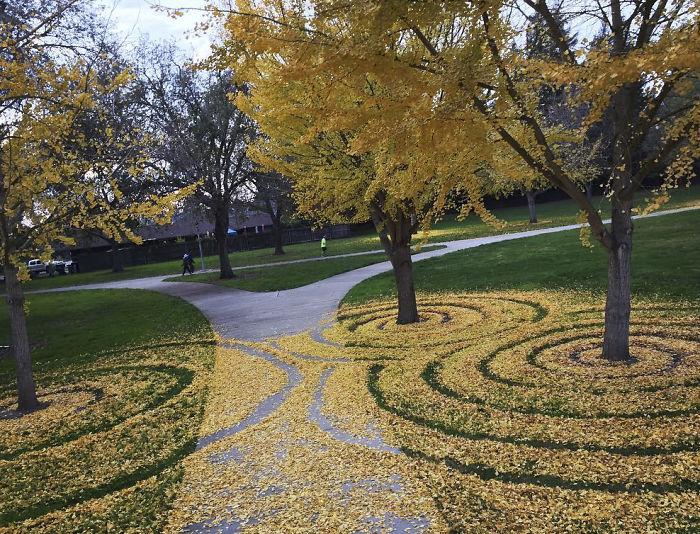 leaf-art-labyrinth-joanna-hedrick-23-5a2f907bbe73d__700