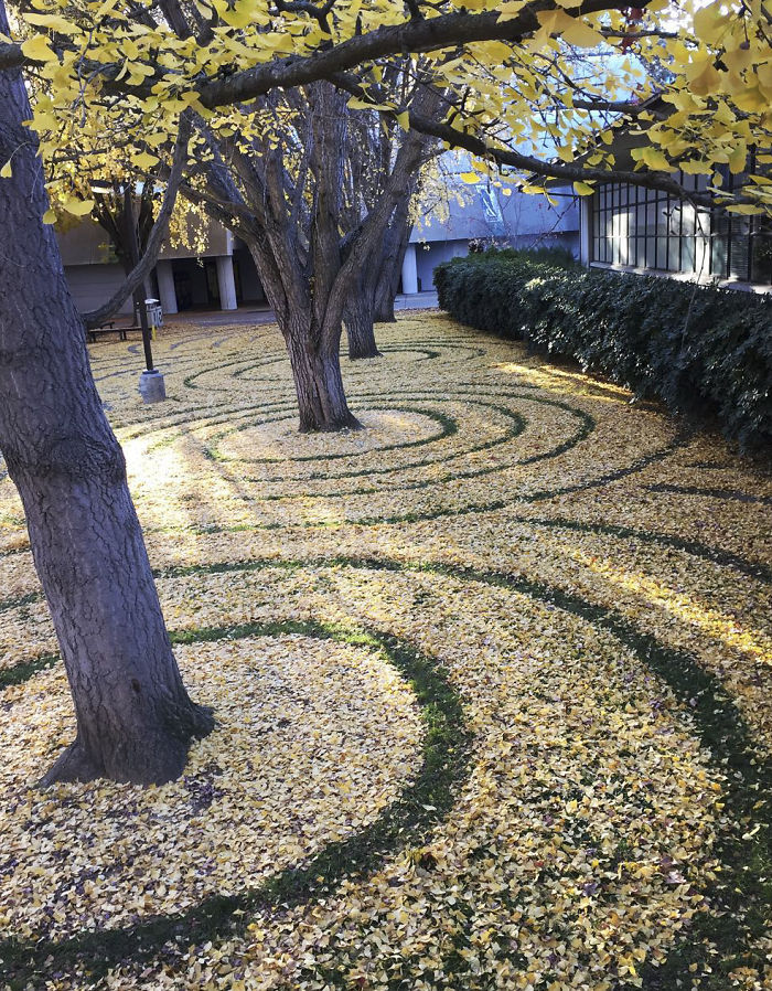 leaf-art-labyrinth-joanna-hedrick-25-5a2f930b8c101__700