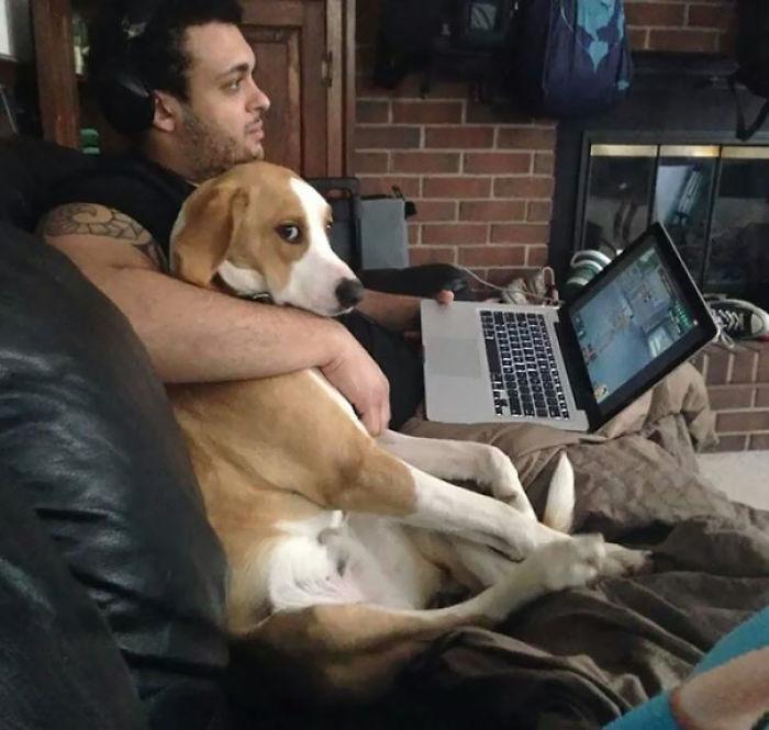 Pets-Stealing-Boyfriend-Girlfriend-Wife-Husband-Dogs-Cats-116-5a16ccd7481b1__700