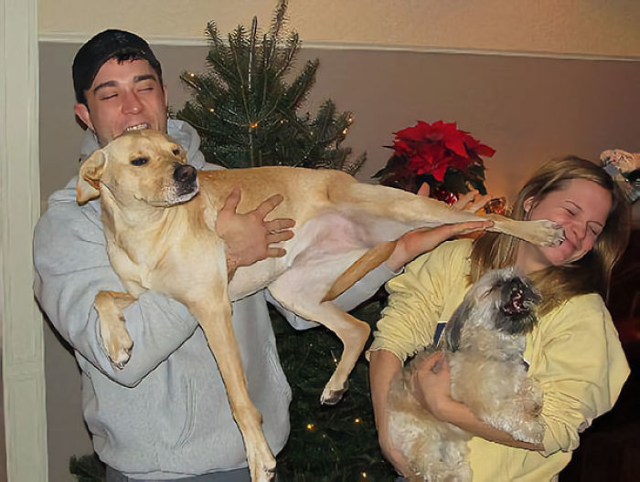 pets-stealing-boyfriend-girlfriend-wife-husband-dogs-cats-18-5a1ebb7c61bb2__700