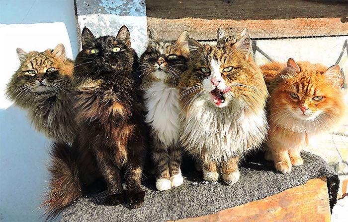siberian-farm-cats-alla-lebedeva-27-5a3380fe09c68__700