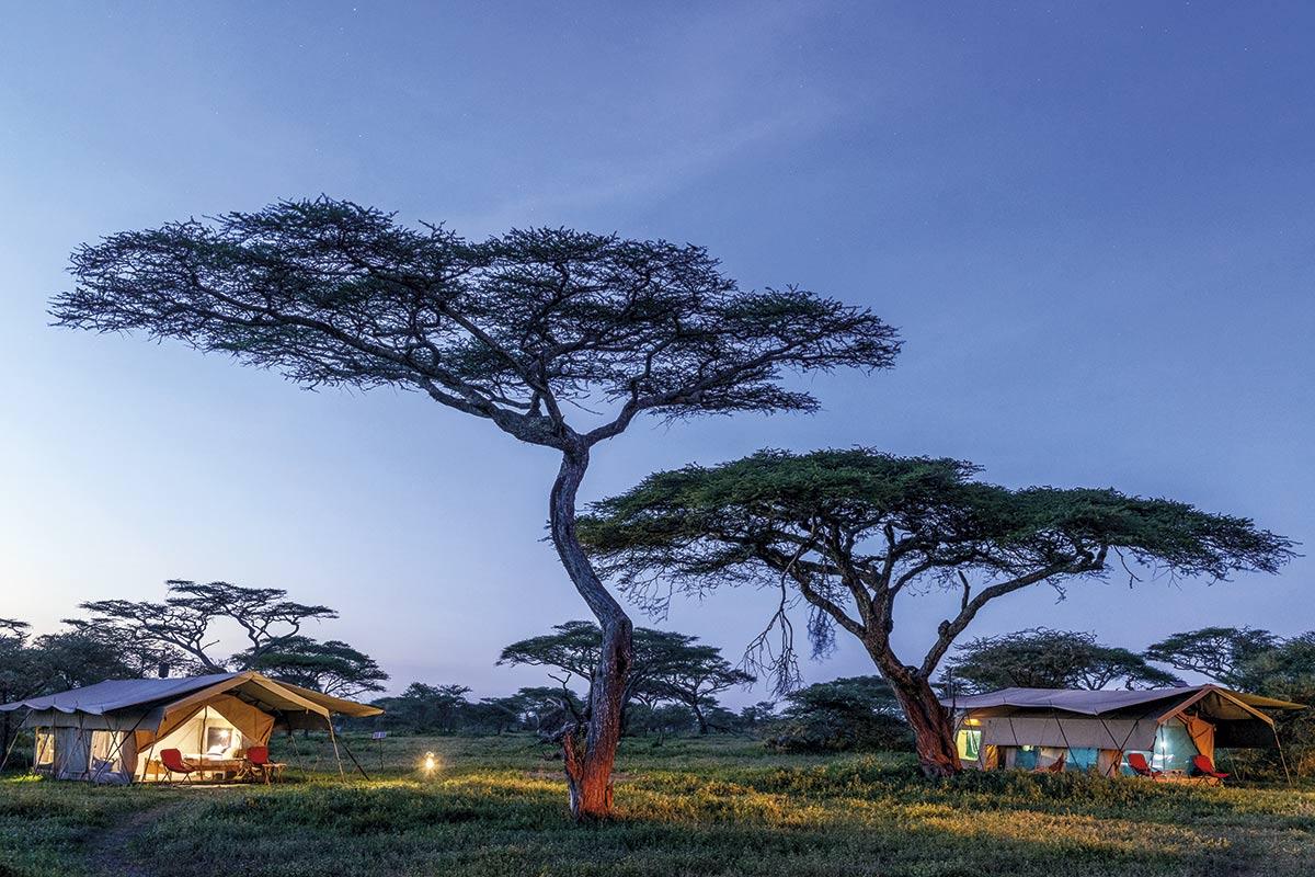 tanzania-acacias_2abe587d