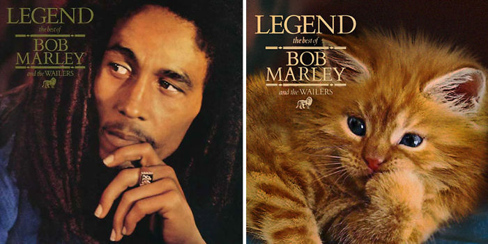 This-guy-created-very-cute-covers-of-the-music-world-replacing-singers-with-cats-5a2e54fbc8985__700