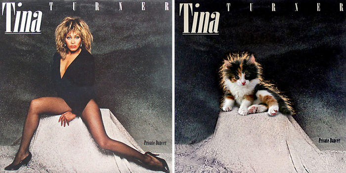 This-guy-created-very-cute-covers-of-the-music-world-replacing-singers-with-cats-5a2e80527ab66__700