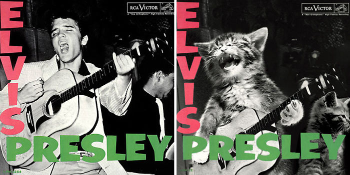 This-guy-created-very-cute-covers-of-the-music-world-replacing-singers-with-cats-5a2e806b81f81__700