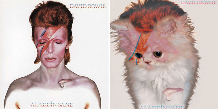 This-guy-created-very-cute-covers-of-the-music-world-replacing-singers-with-cats-5a2e80996884d__700
