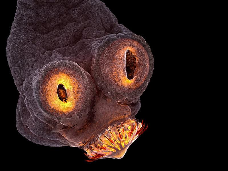 un-gusano-del-infierno_8a50747c