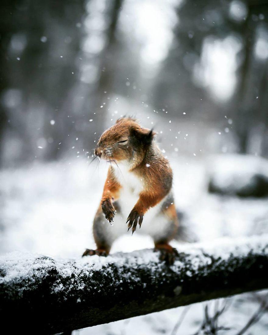 wildlands-animal-photography-joachim-munter-finland-1-5a43ad443440b__880