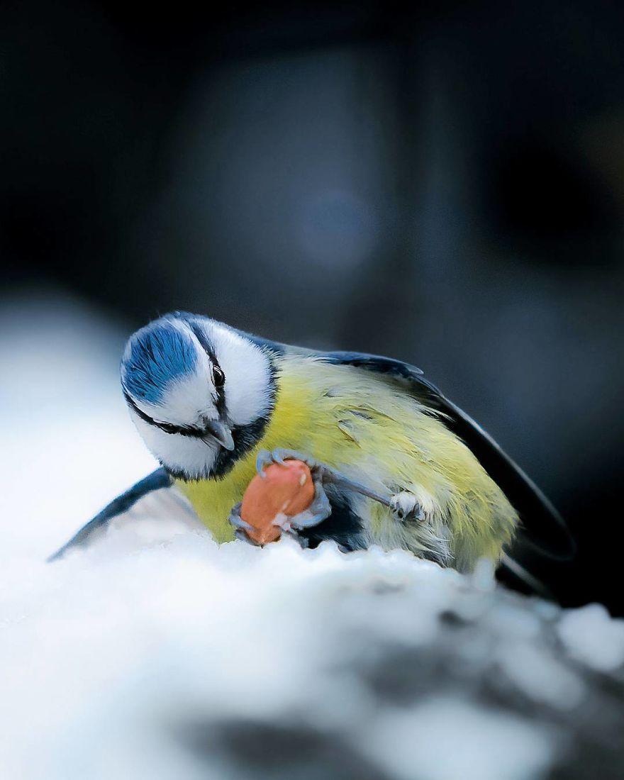 wildlands-animal-photography-joachim-munter-finland-14-5a43ad66b6ae6__880