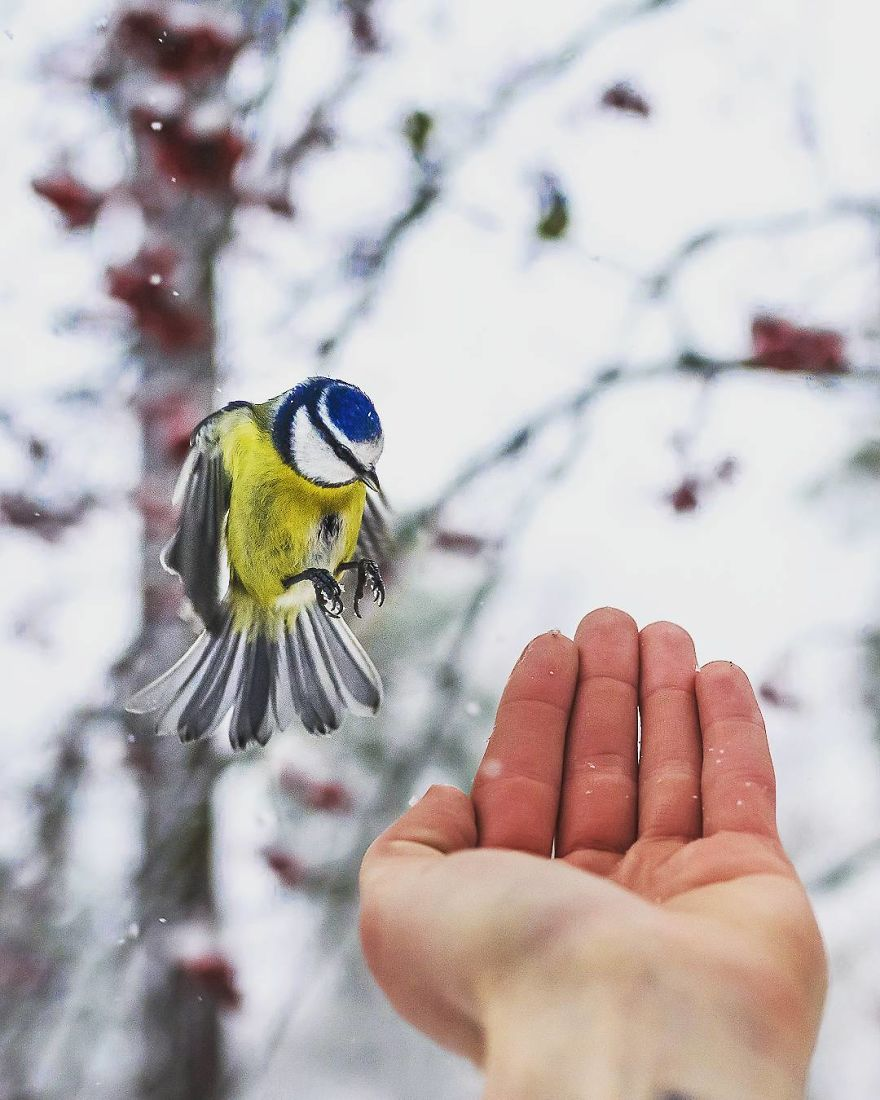 wildlands-animal-photography-joachim-munter-finland-15-5a43ad69d2e2a__880