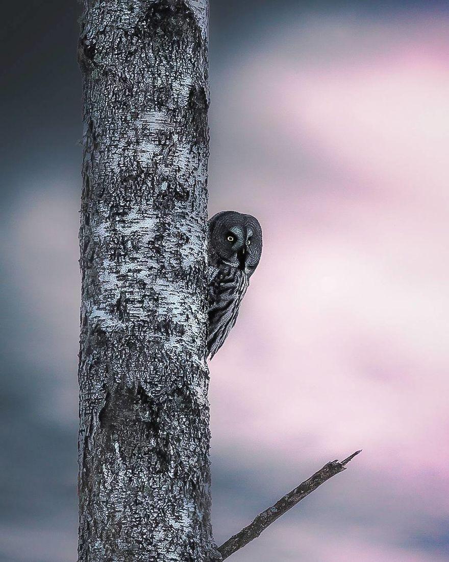 wildlands-animal-photography-joachim-munter-finland-17-5a43ad6ef3bc0__880