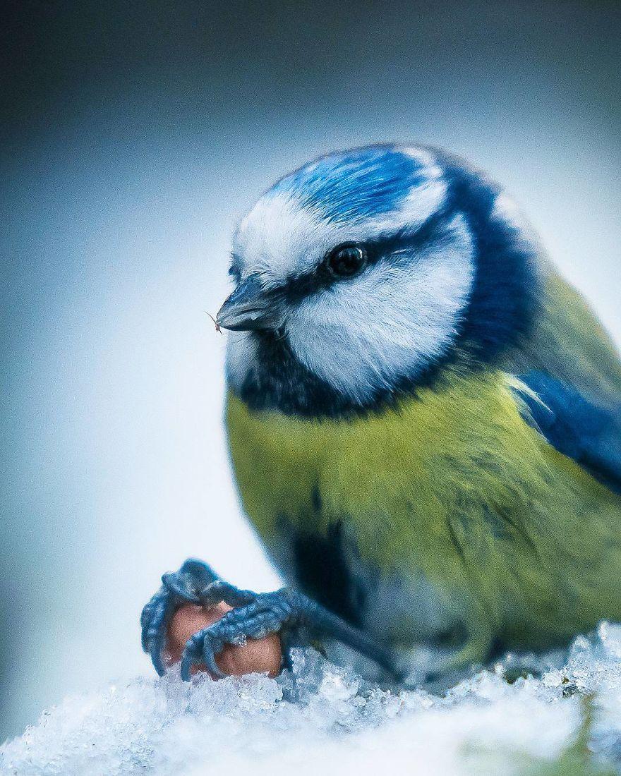 wildlands-animal-photography-joachim-munter-finland-18-5a43ad71c2a22__880