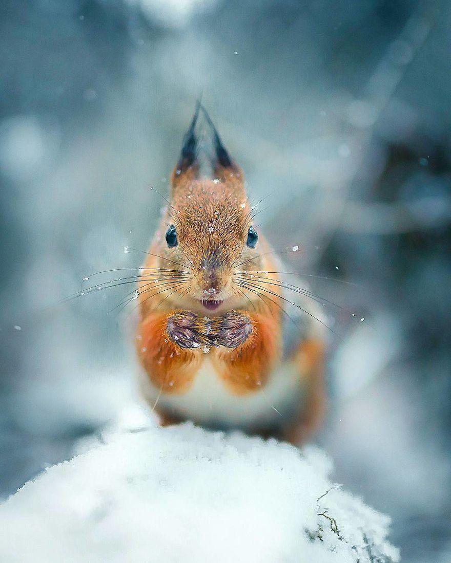 wildlands-animal-photography-joachim-munter-finland-2-5a43ad464dcff__880