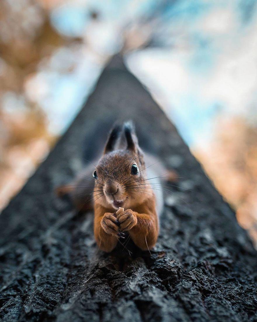 wildlands-animal-photography-joachim-munter-finland-24-5a43ad8309988__880